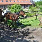 Hof Mormann Ponyferien im Münsterland