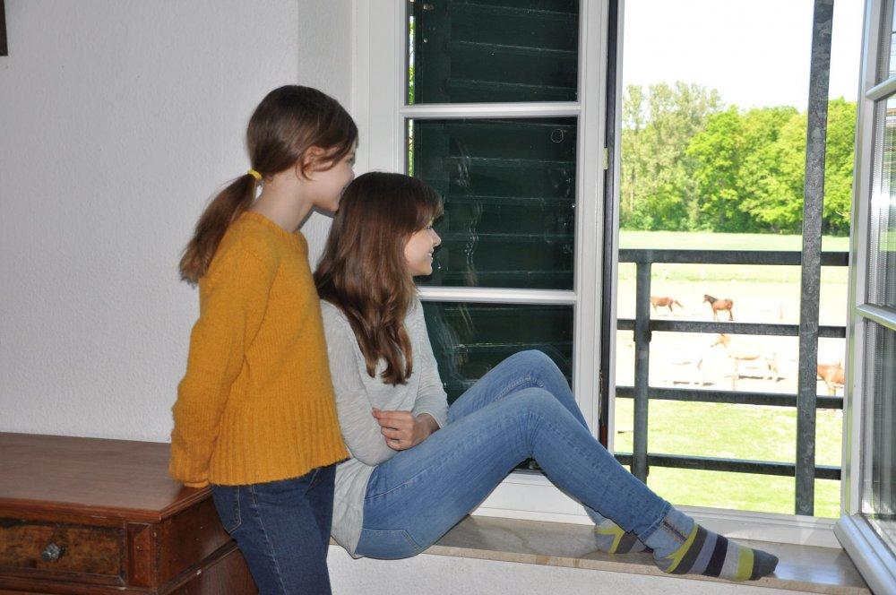 Mormann Hofrundgang Ponys beobachten