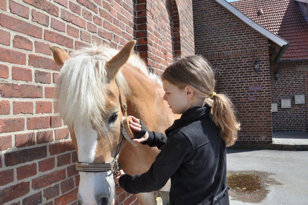 Mormann Hofrundgang Ponys putzen