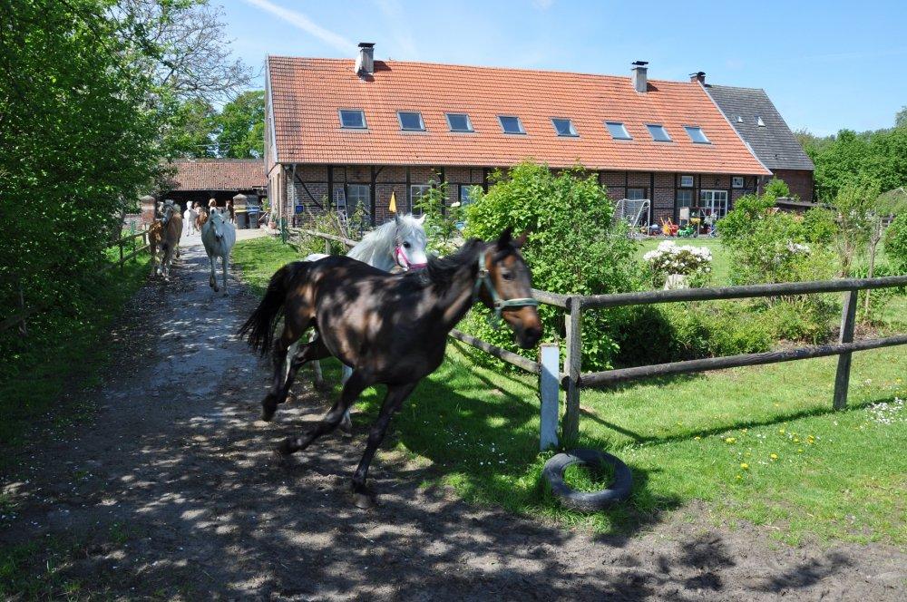 Mormann Hofrundgang Ponys