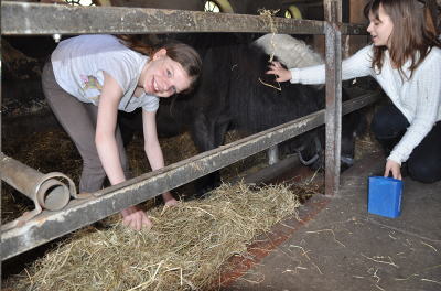 Ponyferien Mormann - Mädchen - Ponys - Mithelfen