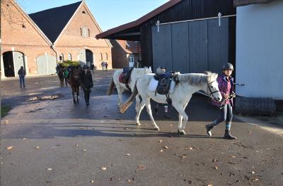 Ponyhof Mormann - Reitstunde